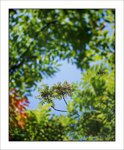 上の方の枝 / Upper Branch #2