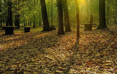 newyork green forest parks