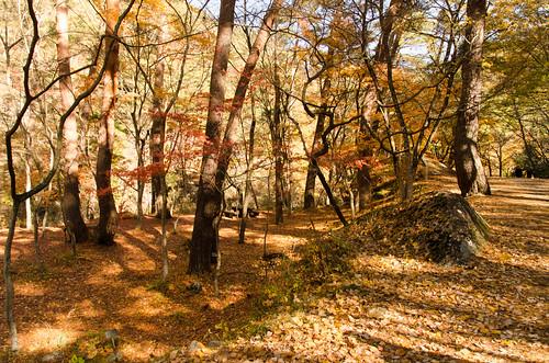 autumnfoliage
