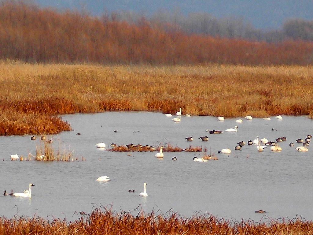 Migratory Birds Rest Stop - Winona, MN