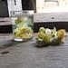 dégustation de fleurs de théiers sauvages