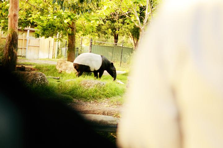 rhino horse