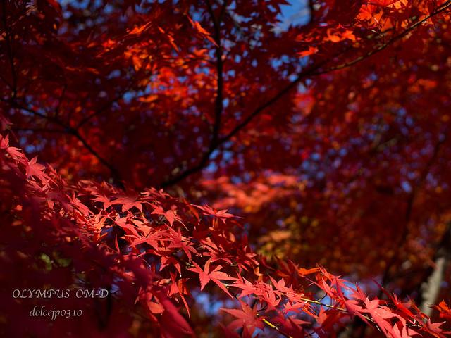 赤く染まる季節
