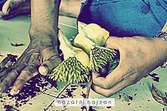 Durians are delicous