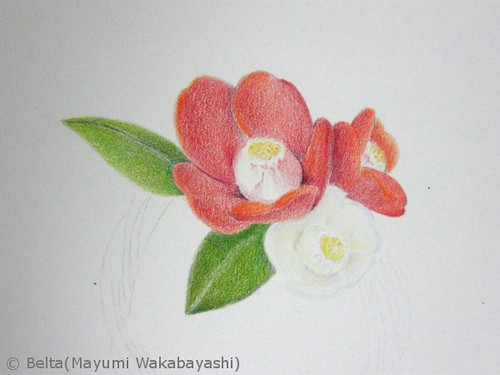 2012_11_27 camellia_02 by blue_belta