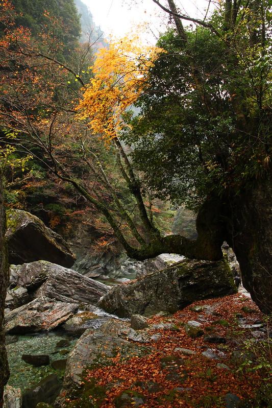IMG_4809_11-23 Yasui Valley