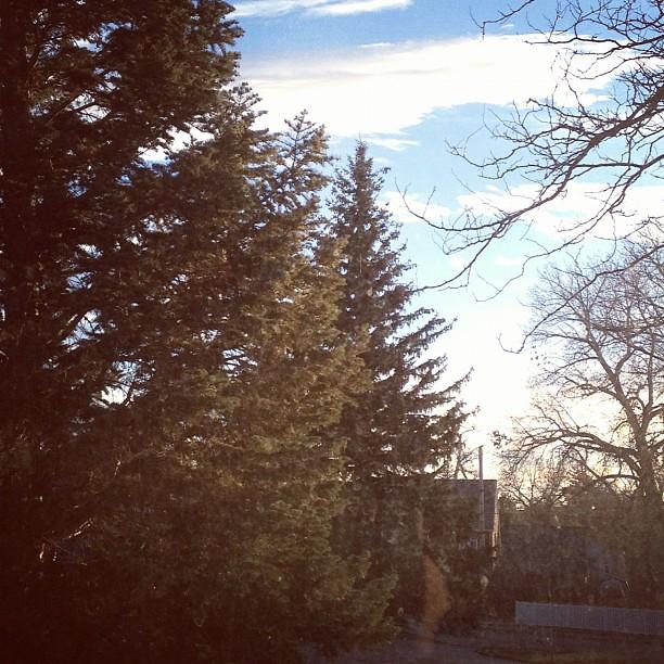 Tree // Day27 11.27.12