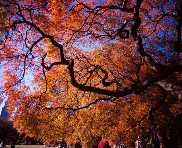 樹葉の内側