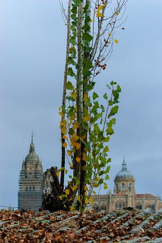 paseando por el otoño sin ira by eMecHe