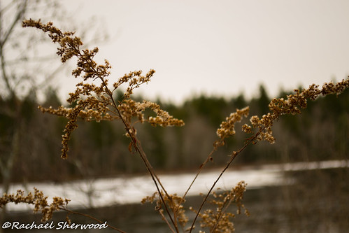 winter lake woodland nikon novascotia middlesackville nikond3100