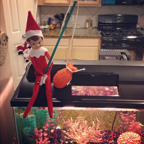 Oh no....Frank caught Nemo!!! 7/24 #elfonashelf