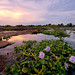 Zambezi Flower Sunset by Panorama Paul