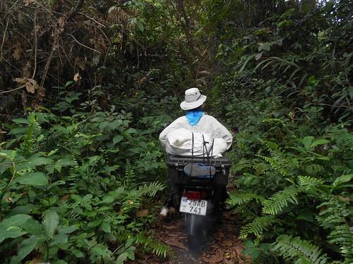 Mangazumbu straitaway