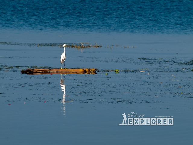 Serenity at Taal Lake