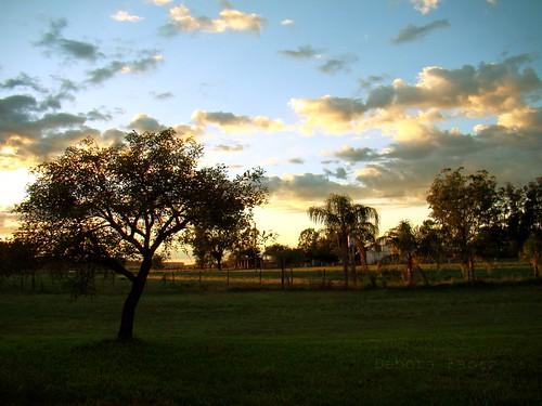 brazil brasil sunrise landscape gimp paisagem céu nuvens beleza árvore riograndedosul amanhecer brésil uruguaiana thegalaxy unipampa