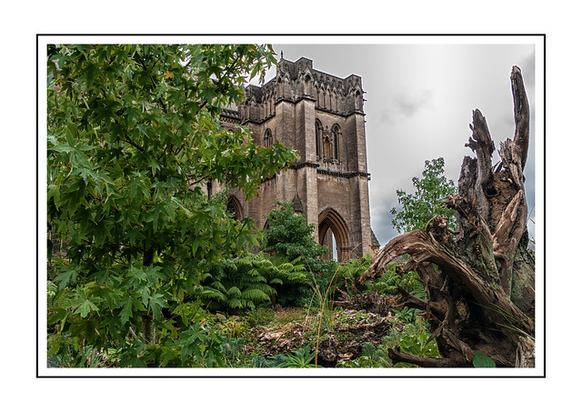 The stumpery and part of Arundel Cathedral