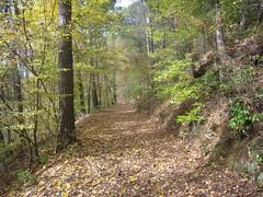 30. A Trail