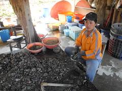 冬天的蚵相對的比較瘦,社區巡禮之餘,還有機會買到現挖的蚵。