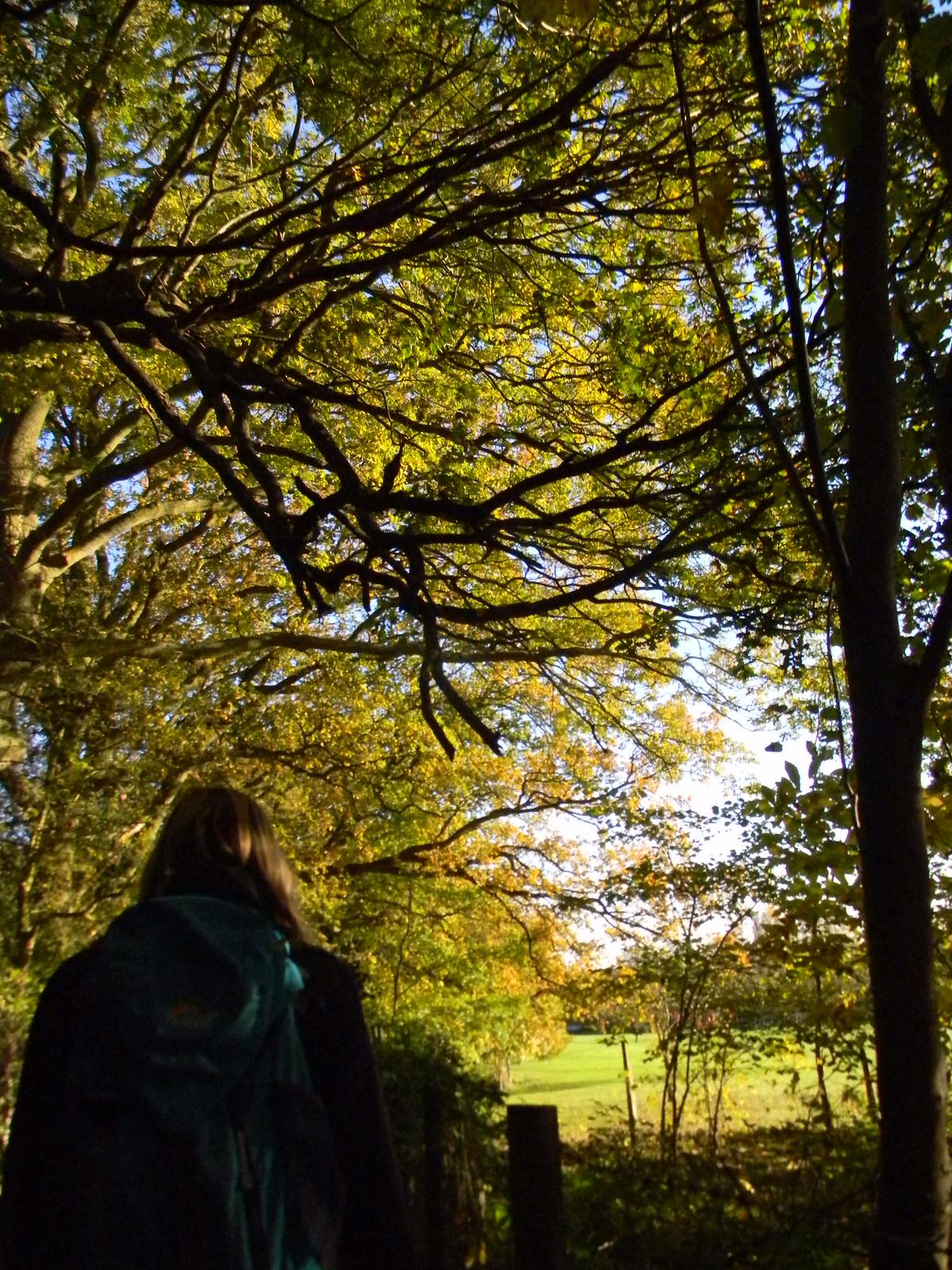 Golden tree Crowthorne to Sandhurst (avoiding Eversley)