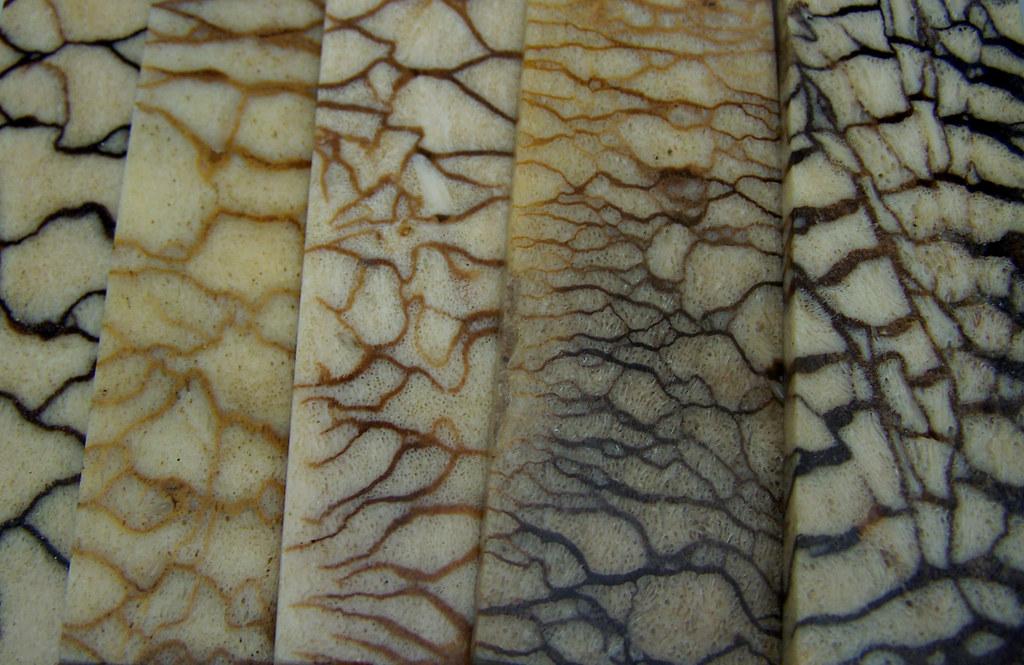 Couteau corail tigré naturel plaque pour réalisation de manche de couteaux