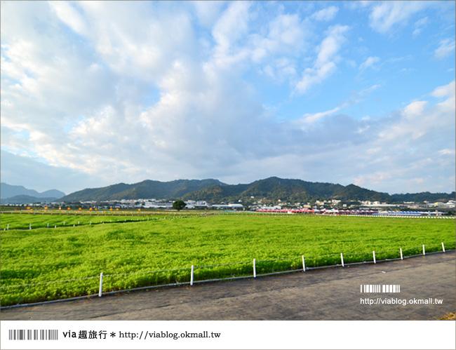 【新社花海2012】2012新社花海節活動介紹及交通資訊8-7