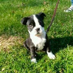My Zoey! #puppylove