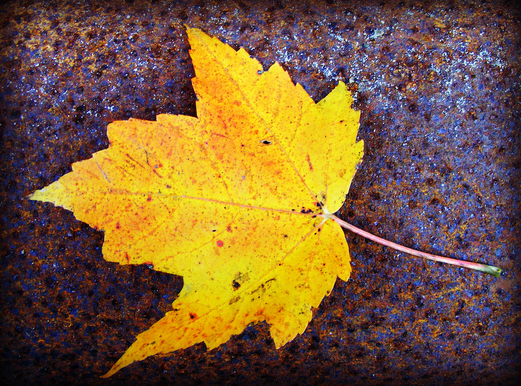 yellow leaf against rusted metal