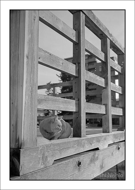 ウッドデッキから眺める / Viewing from wooden deck