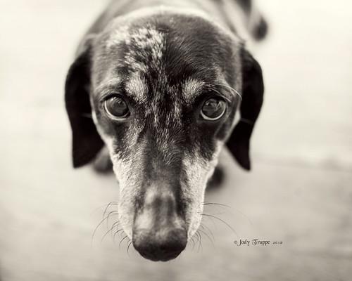 Did you walk the dog?