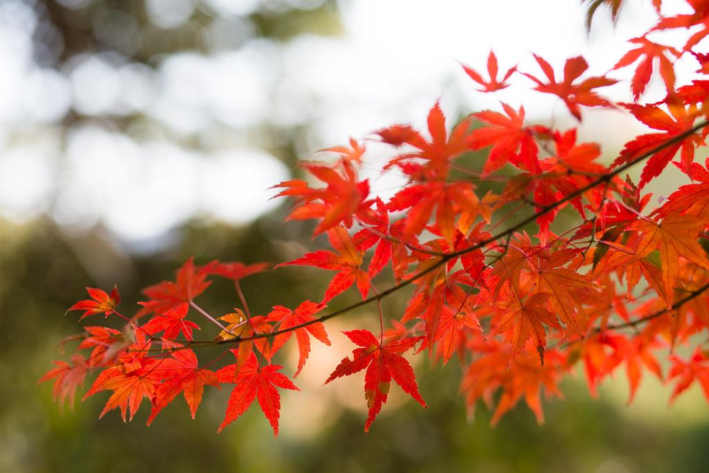 Kyoto-shi, Kyoto Prefecture, Japan, 0.01 sec (1/100), f/3.2, 85 mm, EF85mm f/1.8 USM