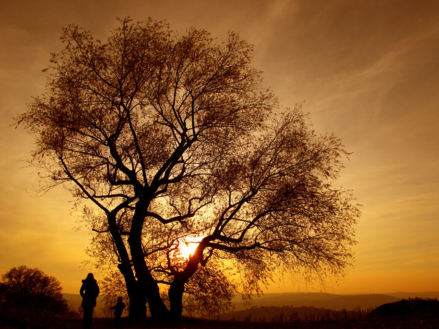 Mother and Son under a Willow Tree watching Sunset