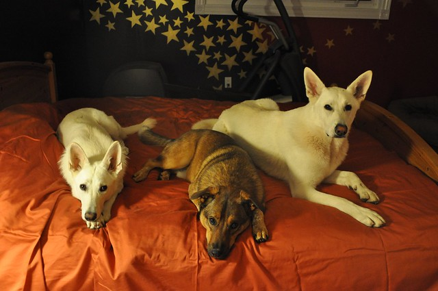Maggie, Denny, Happy in my bed 2011