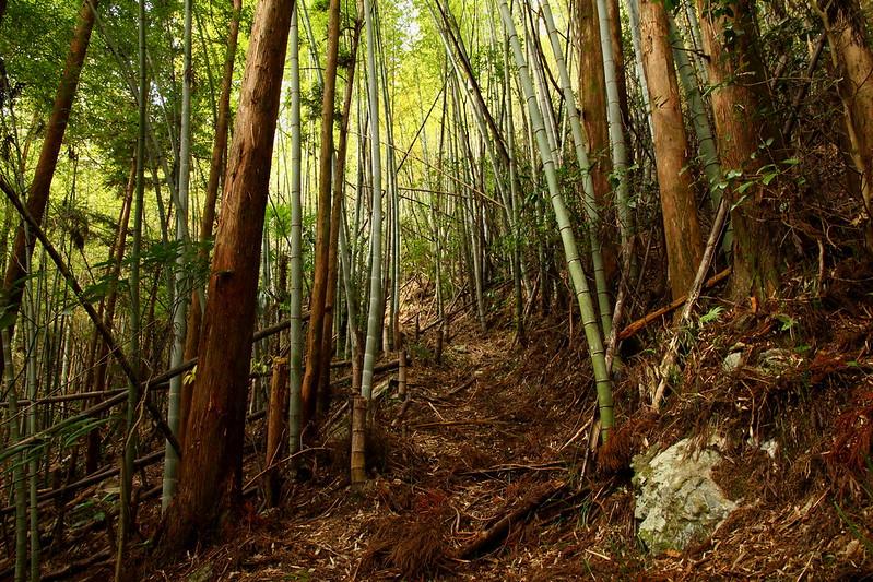 IMG_4893_11-24 Koshikigadai