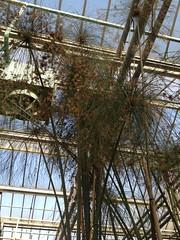 Inner garden performance - Botanic Gardens Gent