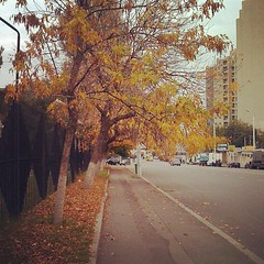 #Autumn #Fall #yellowleaves #fallenleaves #tbilisi