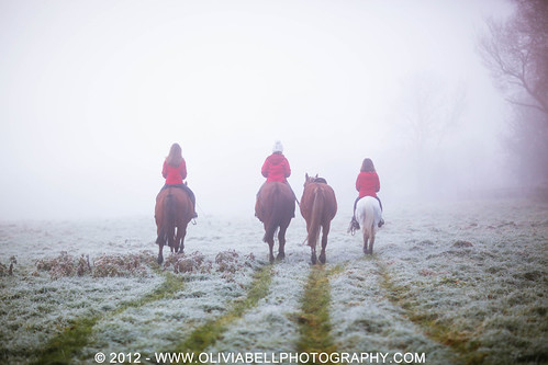 Training Horses in the Fog - Day 215/365