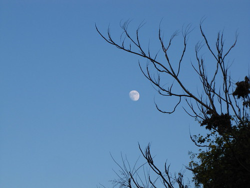 Branches and moon