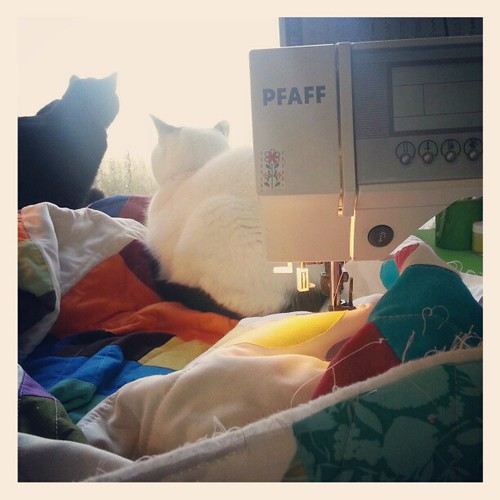 My assistants. Plus a new rainbow quilt.