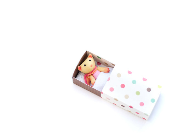 tiny cat in matchbox
