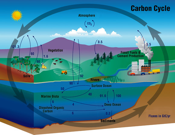 Carbon    Cycle   Flickr  Photo Sharing