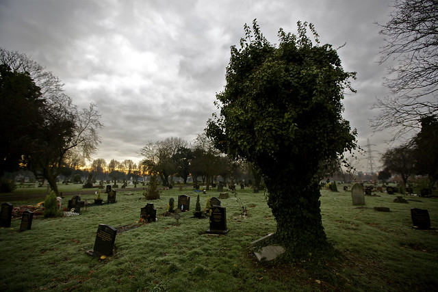 graveyard ivy tree v2