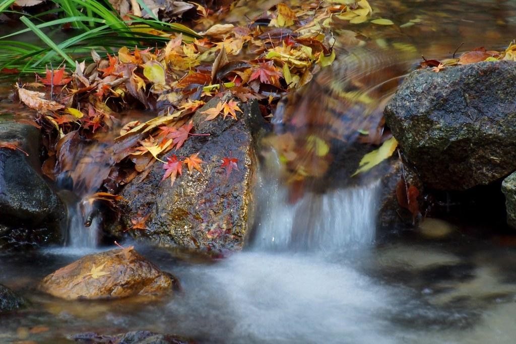 下賀茂神社糺の森の秋