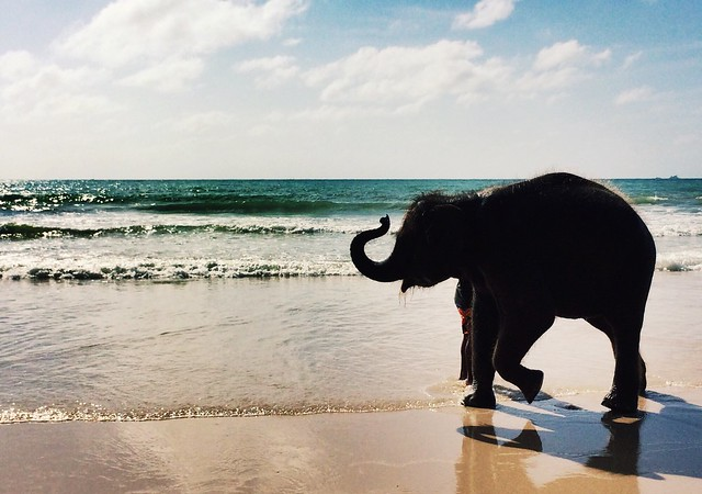 A happy baby elephant enjoying in beach with out any restrictions. #Happylife