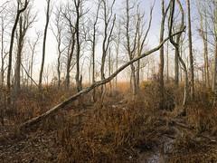 Accokeek Creek marsh