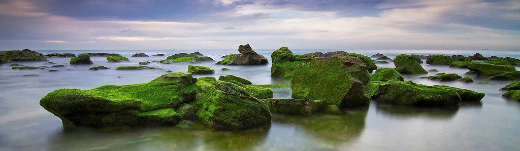 Mossy Seascape Panoramic.