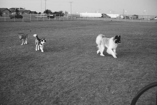 jaxharmon_dogpark_10