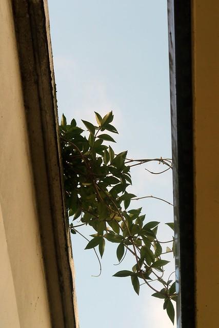 Plante qui pousse flickr photo sharing for Plante qui pousse