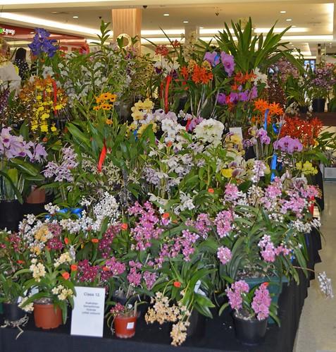 Strathfield Plaza Spring show 2012