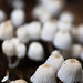 Mushrooms @ Eden Project, Cornwall
