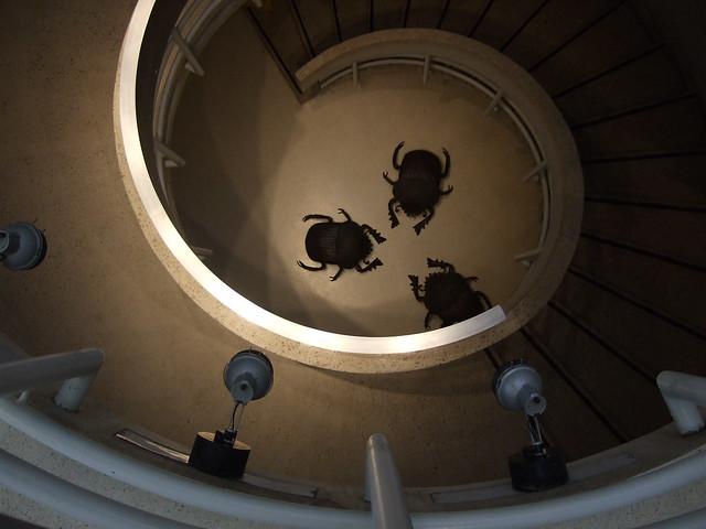 beetles9
